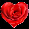 Une magnifique rose en forme de coeur