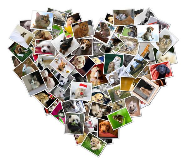un coeur rempli de photos d'animaux