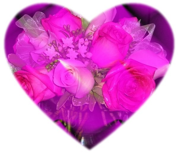 un coeur de jolies roses roses centerblog. Black Bedroom Furniture Sets. Home Design Ideas