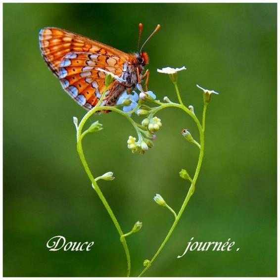 Papillon et Coeur pour une douce journée