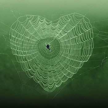 Gif toile d 39 araign e centerblog - Toile d araignee en papier ...